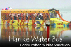 Harike Water Bus